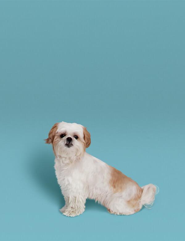 Lotte – Hundefoto